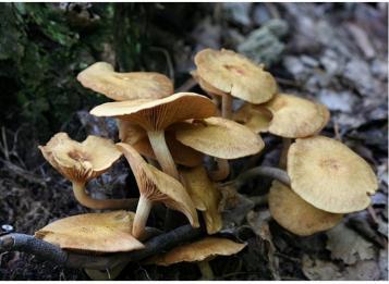 Pericolo Funghi