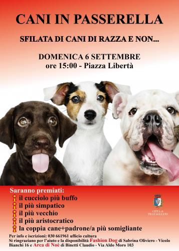 Cani in Passerella